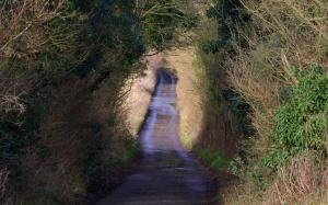 chalk hedge 036