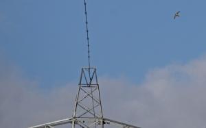 peregrine pylon 064