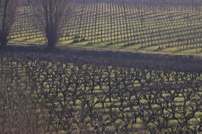 teynham orchard 180