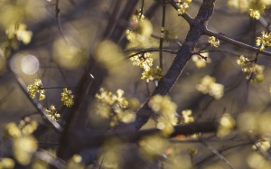 rumija oak 246