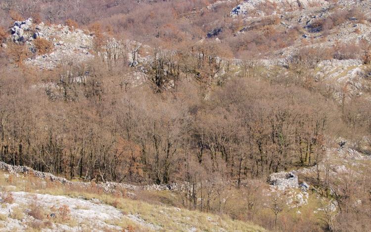 rumija rocks 318