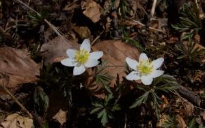 Biograd spring melt 393