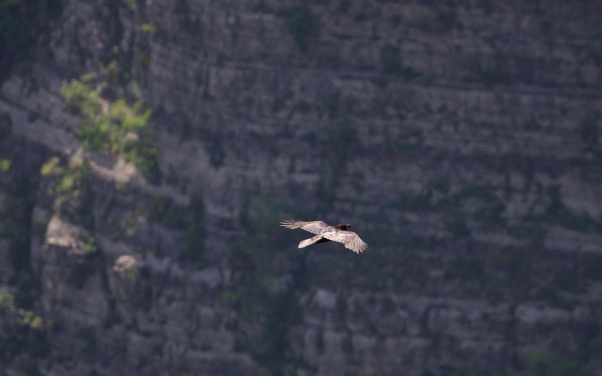 Chasing Apollos in the Rijeka Cijevna Valley
