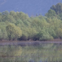 Lake Skadar Transitions