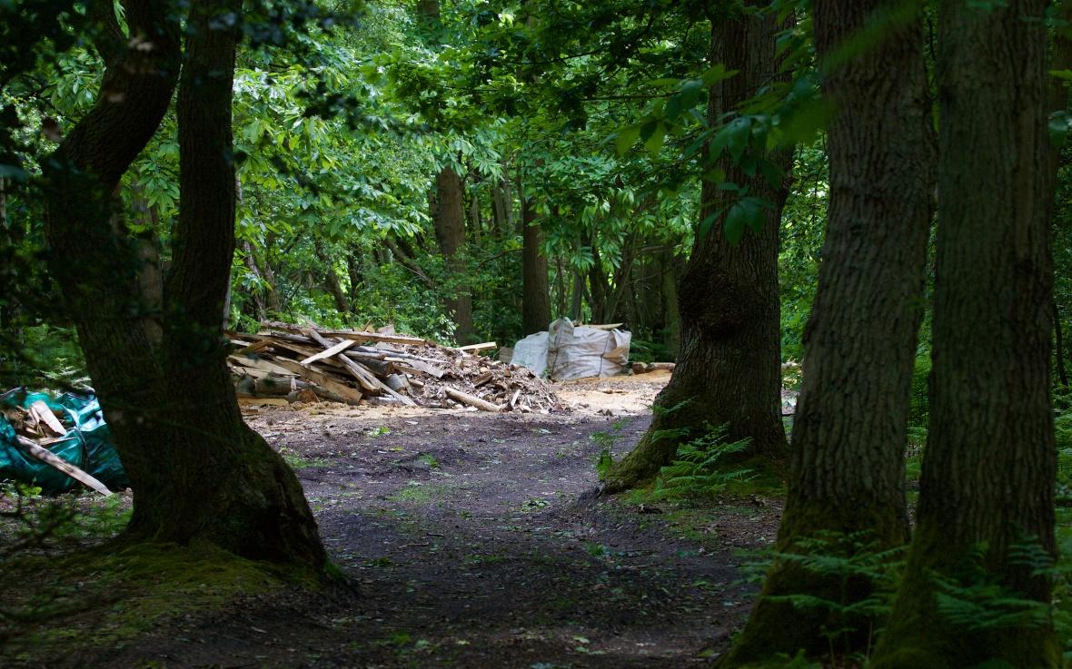 Farningham Wood 522