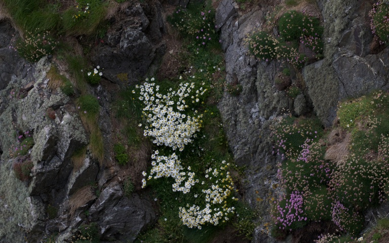 Wales June 5 531