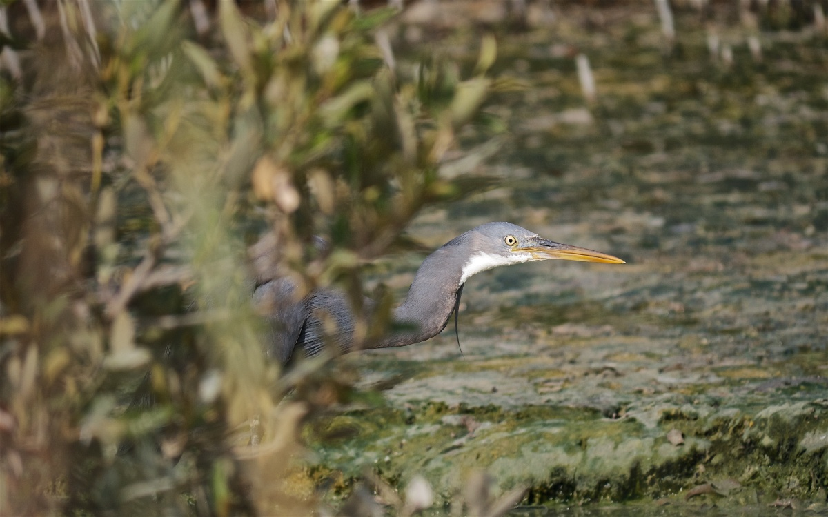 Yas Island - A Photographic Guide to the Birds of Muddy Mangroves