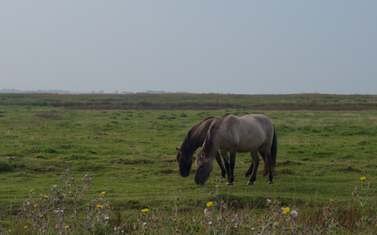 Oare Marshes 635 (1)
