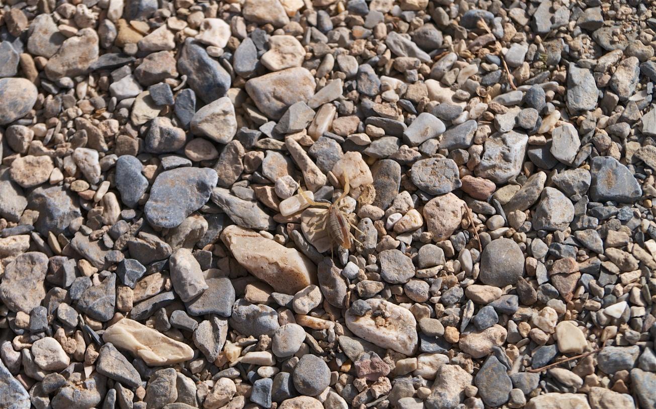 sayq scorpion 978