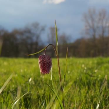 Charente Spring 1008