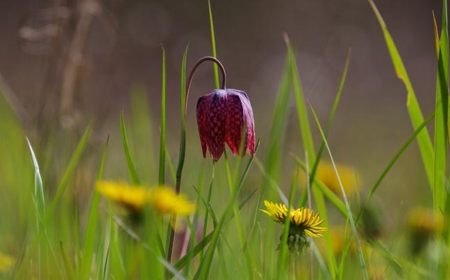 Charente Spring 1009