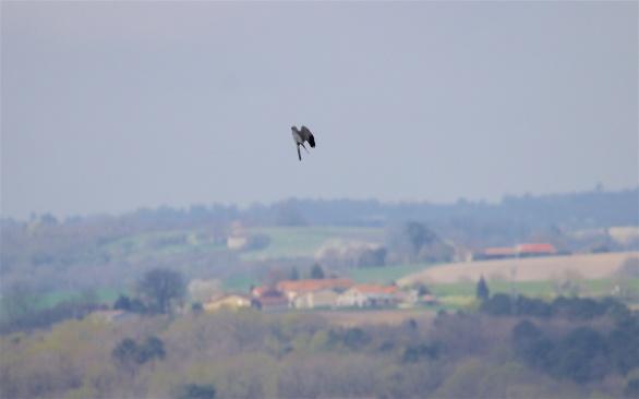 Skydance 2: he keeps going