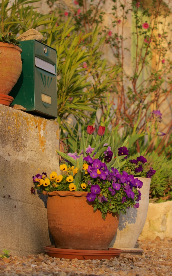Garden plants