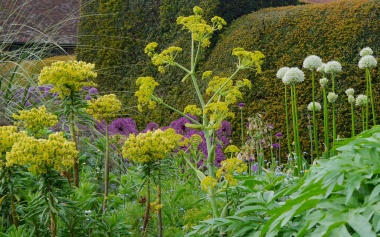 Alliums and fennel