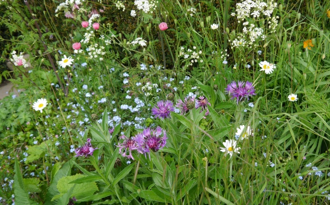 Knapweed, pink poppy, daisy and forget-me-not.