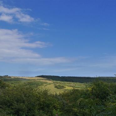 Lullington heath