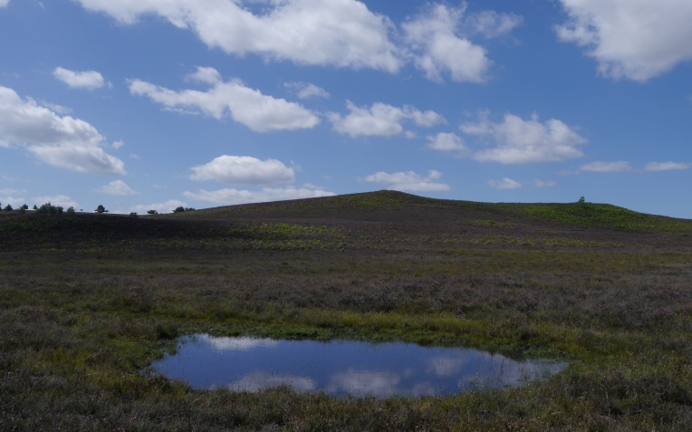 Valley mire beneath hills of dry heathland