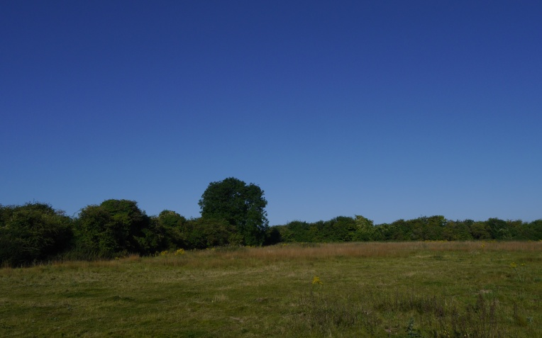 Abandoned fields, untended hedgerows and old ash tree