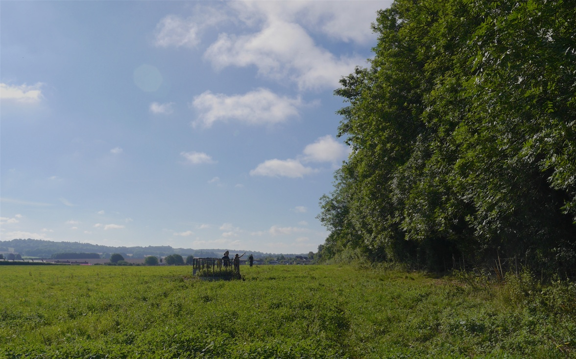Ash trees and 'ash brownie' hunters