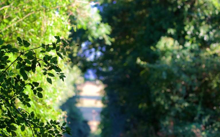 autumn-blues-12
