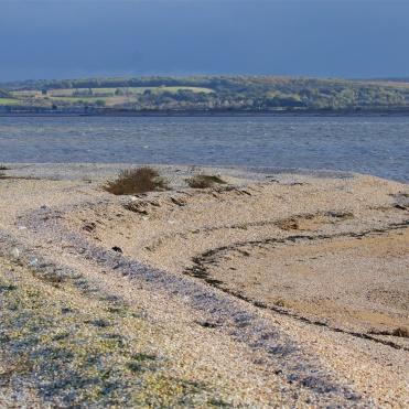 Shellness and the Swale
