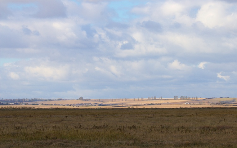 Saltmarsh that is part of Swale National Nature Reserve