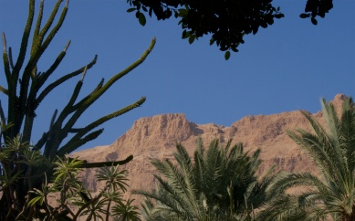 Exotic plants and dry hills