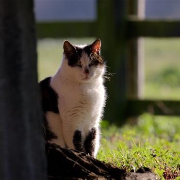 Churchyard cat