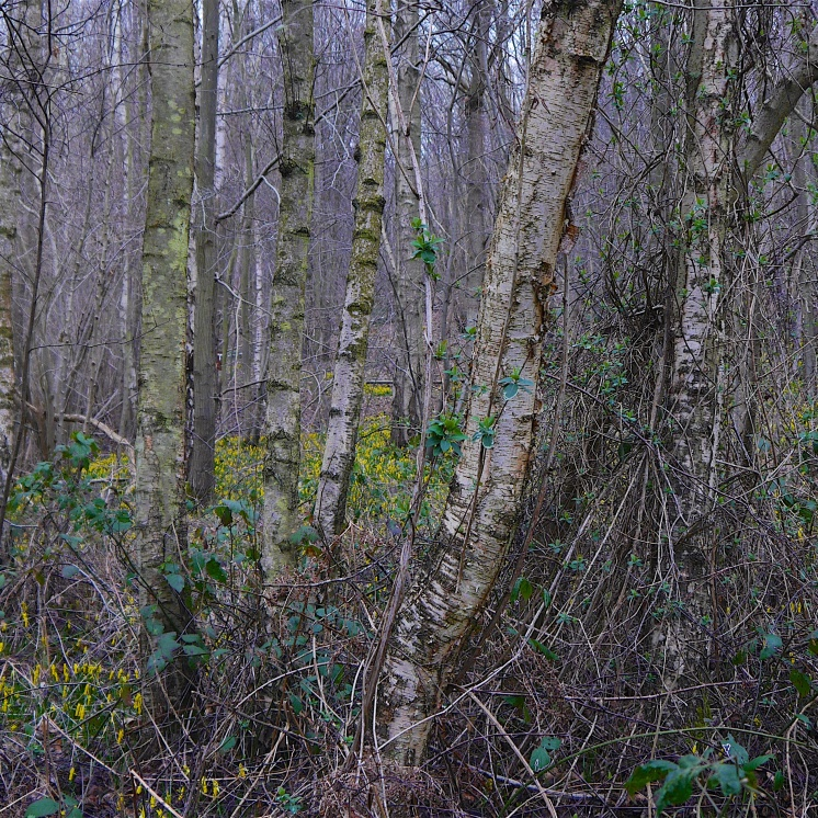Hilly Wood