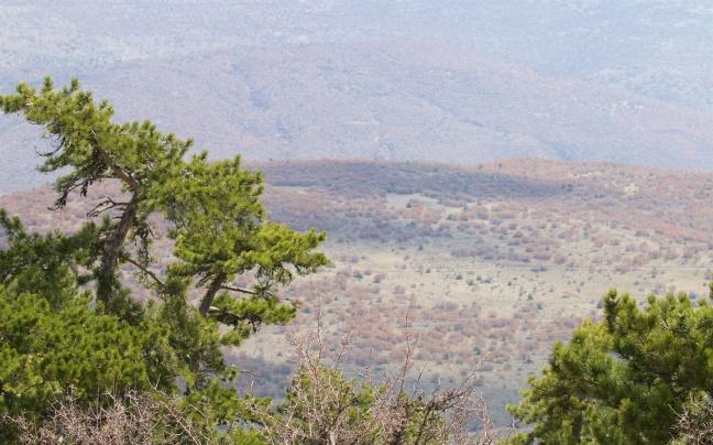 Scrub oak woodland dominates the mid-hills
