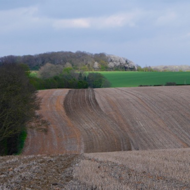 Fallow field with bird cherry in blossom on the horizon