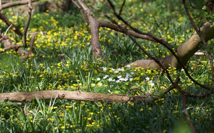 Hartnips Wood 6