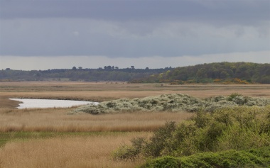Walberswick reed bed with flowering blackthorn and Dunwich Forest beyond; one of the great reeds beds of East Anglia