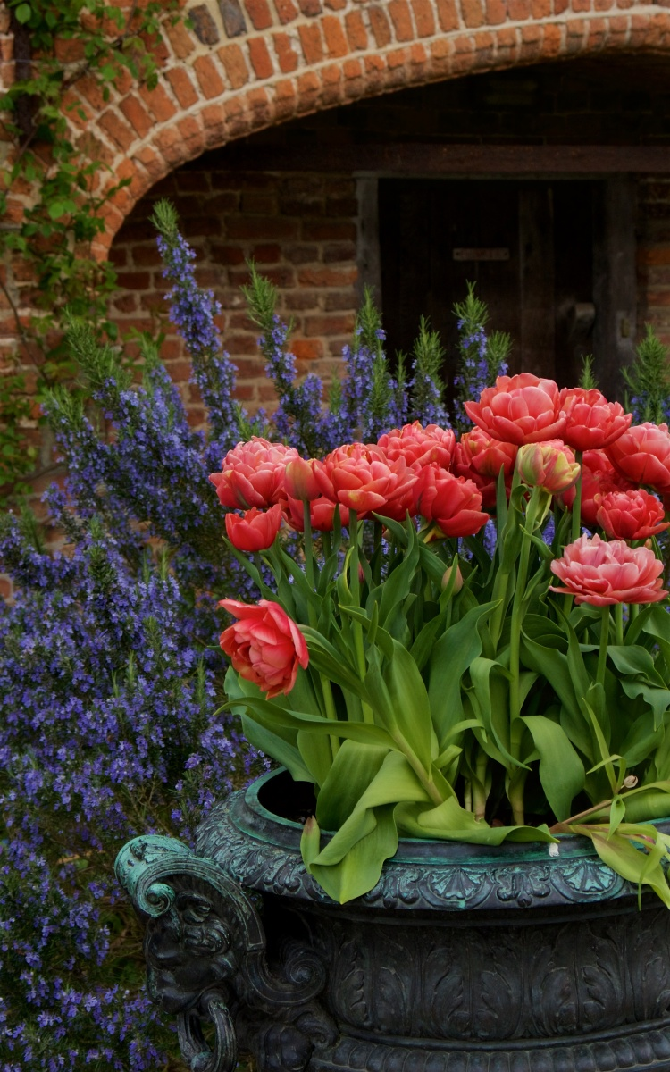 Sissinghurst's Rite of Spring