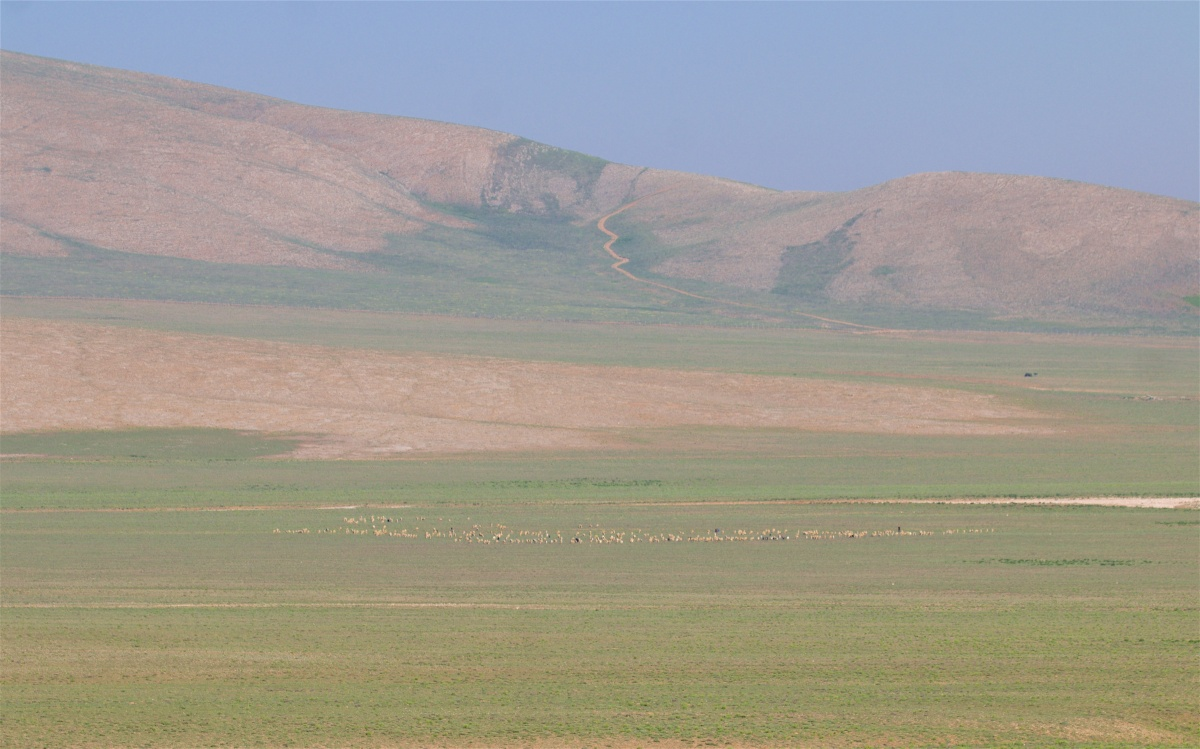 Bozdağ Milli Parkı, Eşmekaya and Gölyazı Bird Surveys