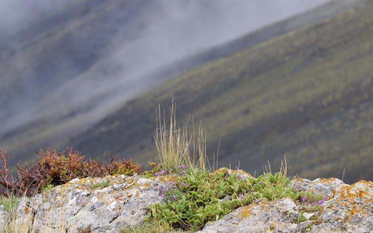Black basalt slopes