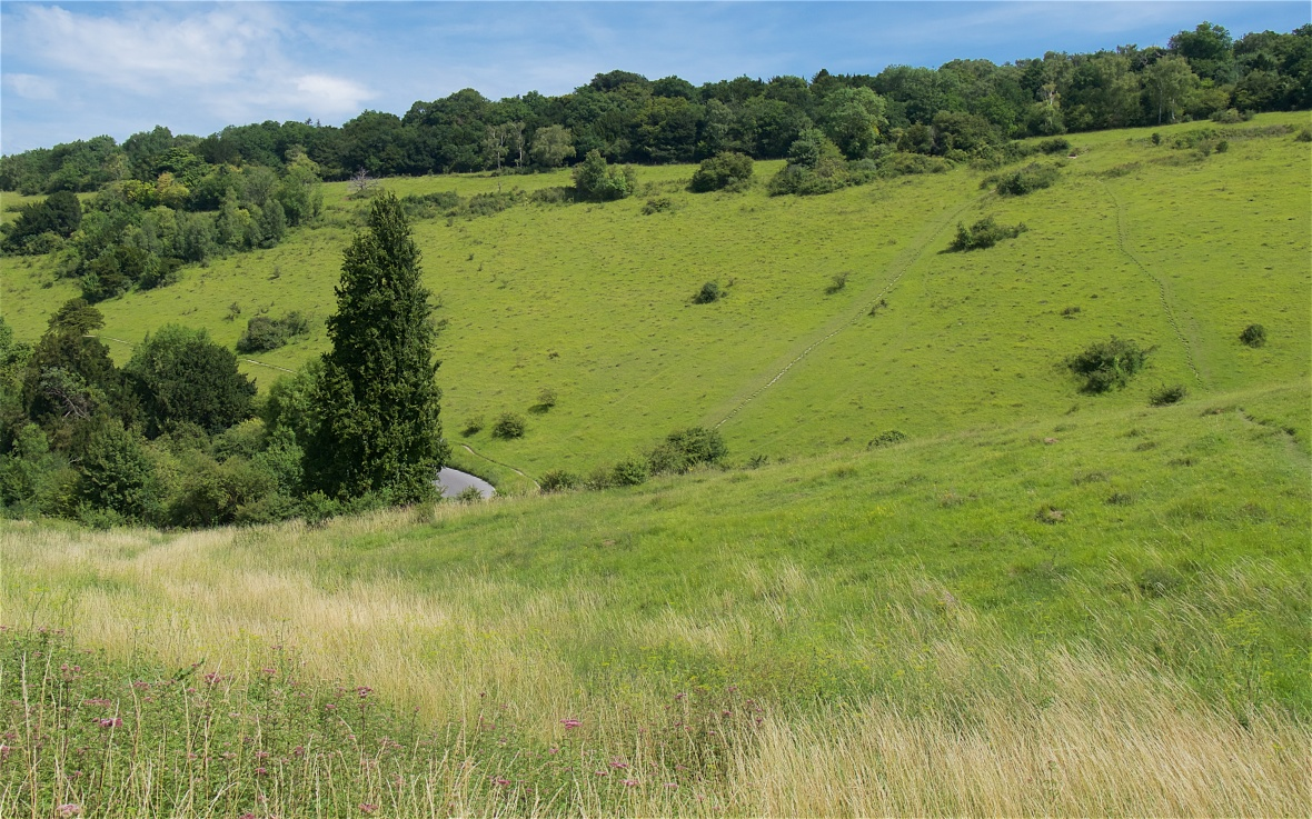 Box Hill and Langley Vale 2