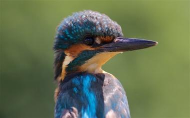 Hand-held immature kingfisher 3