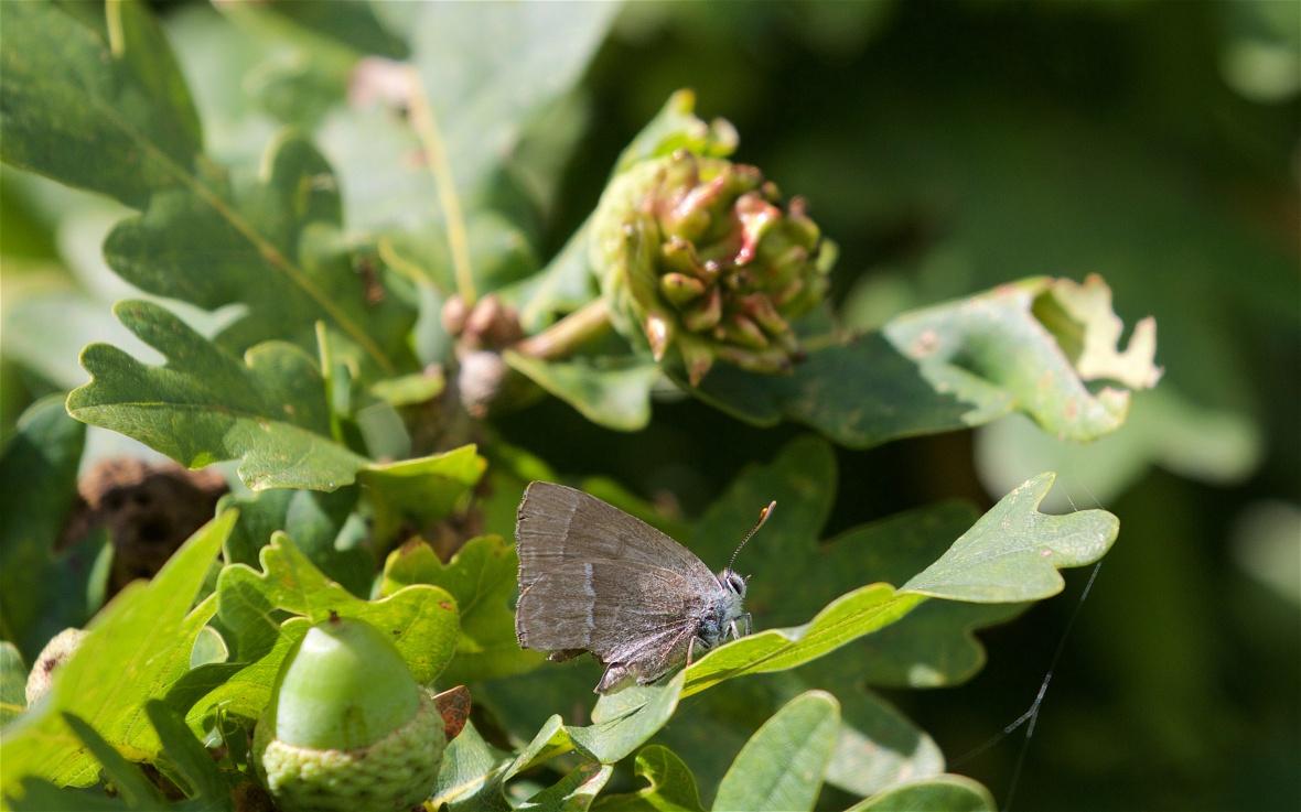 July Butterflies 3 (1)