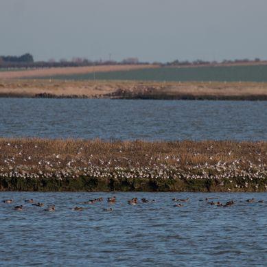 High tide wader roosts