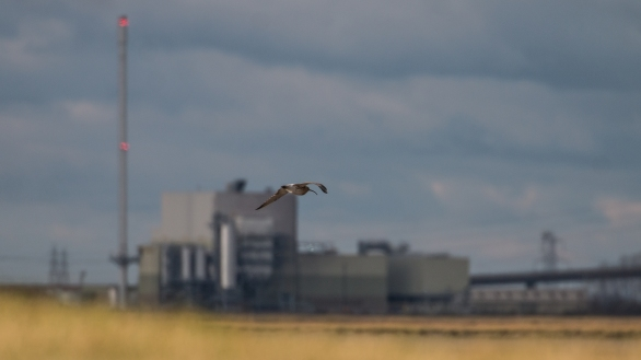 Curlew returning to the estuary