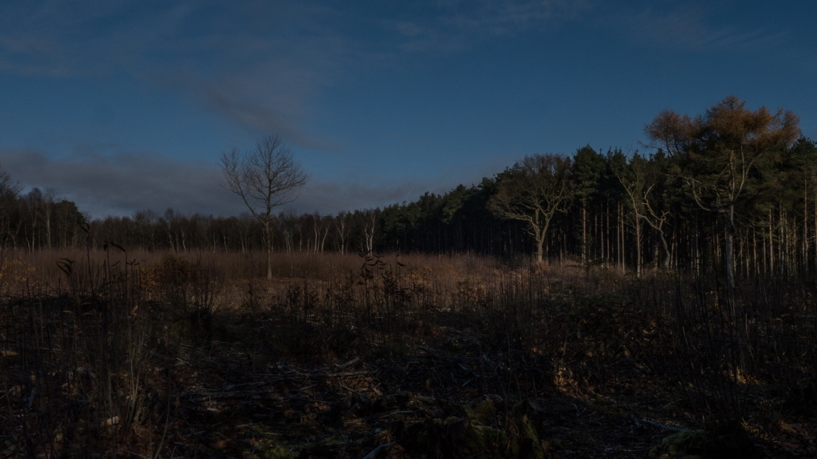 Conifer plantation and sweet chestnut clearfell with oak standards