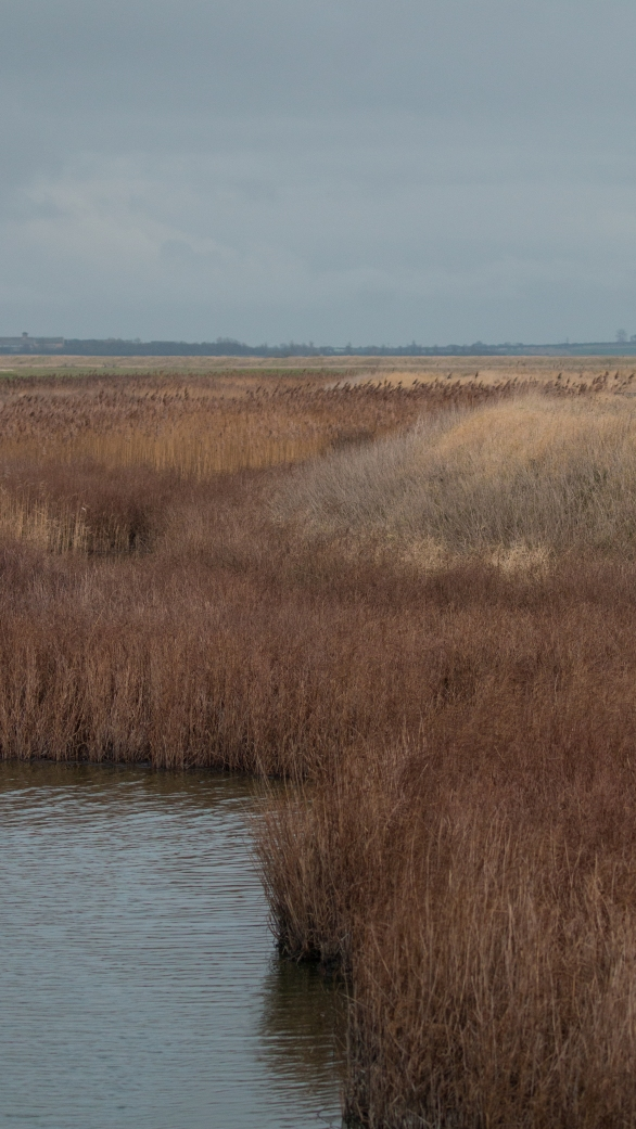 Rich reedbeds