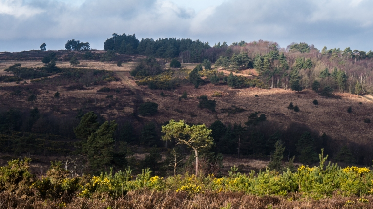 Heathland lit by the morning sun