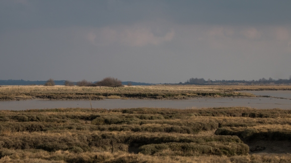 Saltmarshes and a distant view of Osea Island