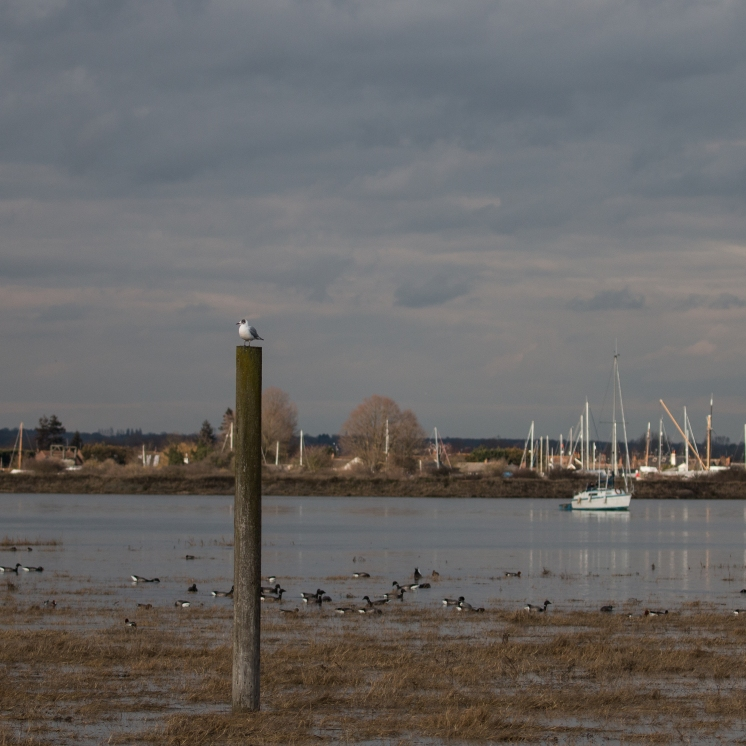 High tide on the Blackwater