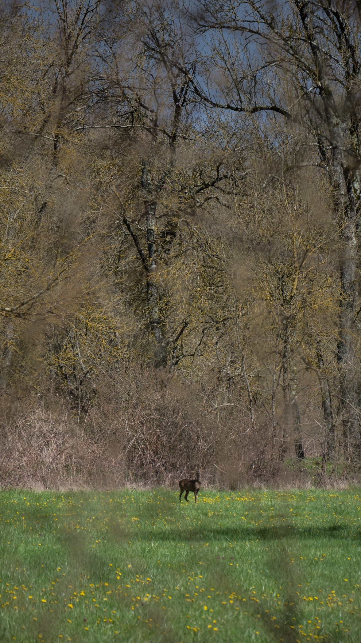 Red deer on the edge