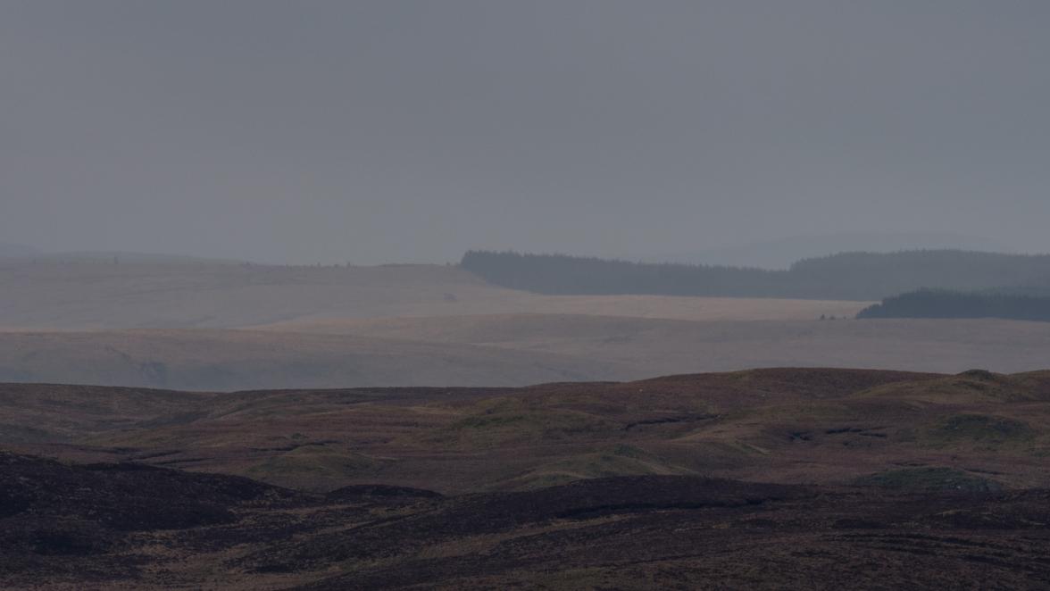 Blanket bog, grass moor and forest
