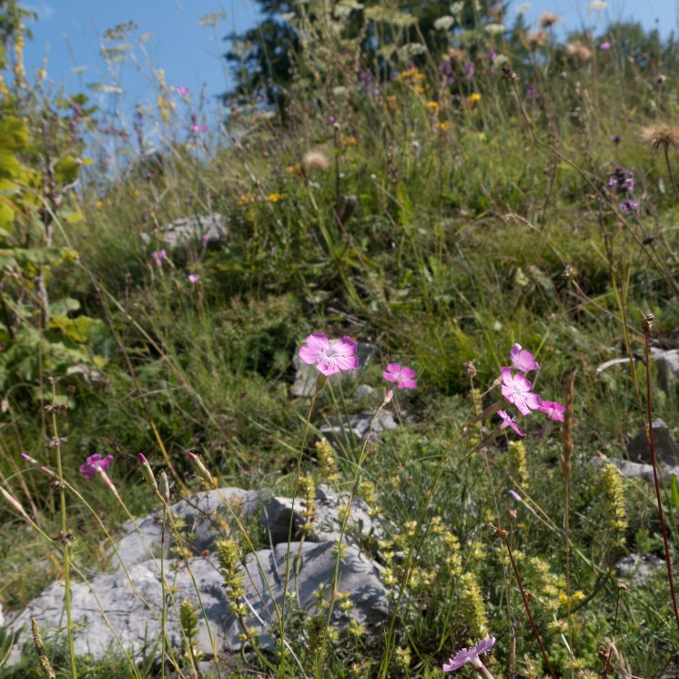 Pinks and grasses