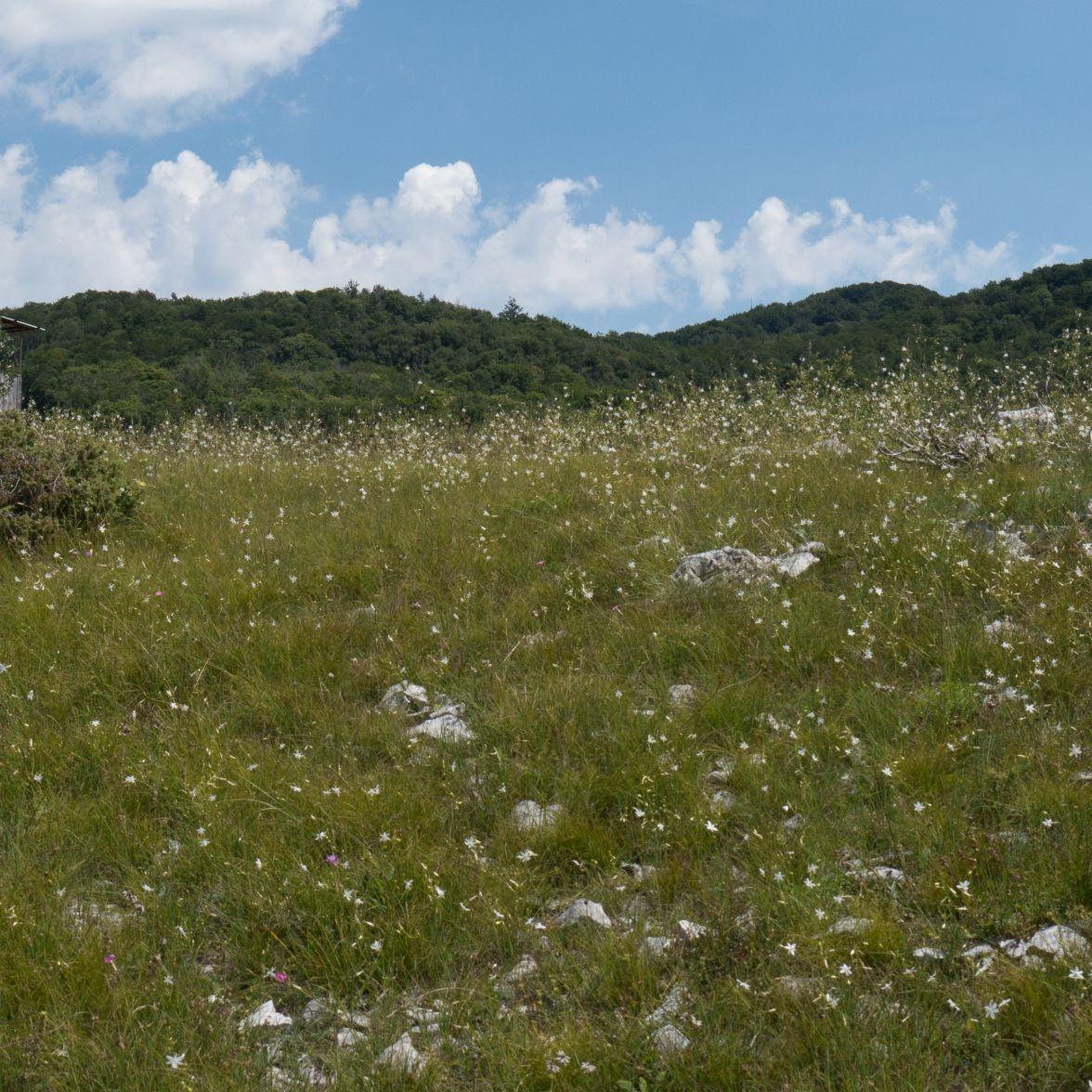 Limestone grassland